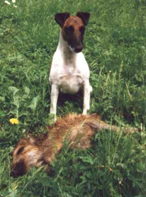 Picture: The Hunting dog